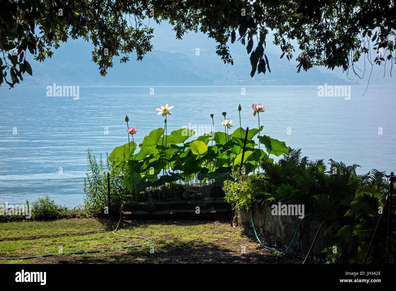 Riva Di Solto, Lago Iseo, Italy - Stock Image