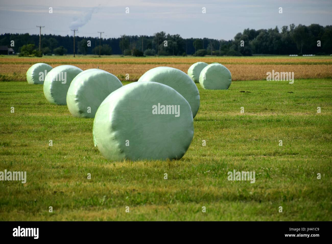 rural idyll, Silage balls, grass Silage, maize Silage, Silage bale, Silage heap - Stock Image