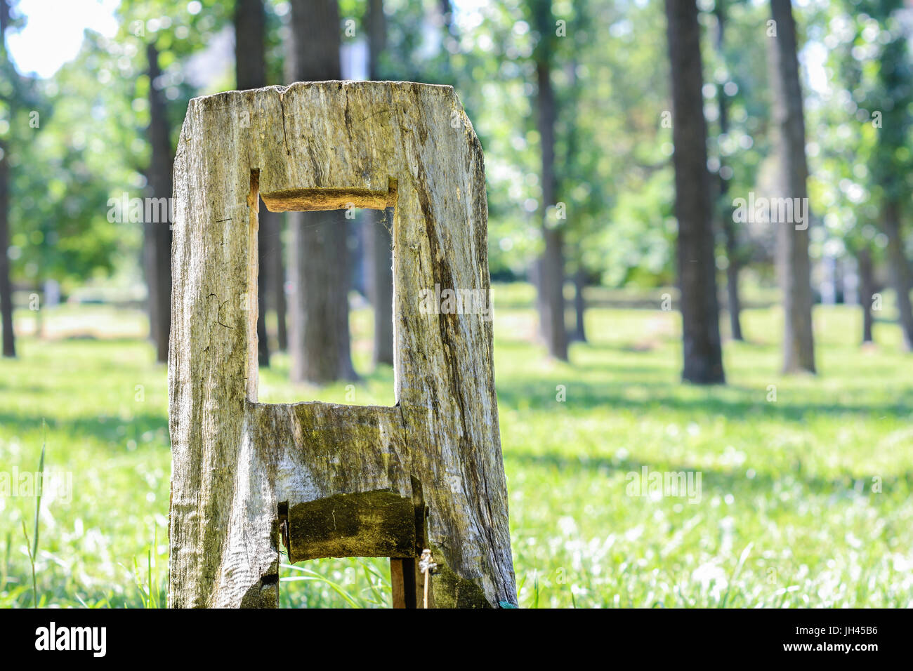 Stump in the park. - Stock Image