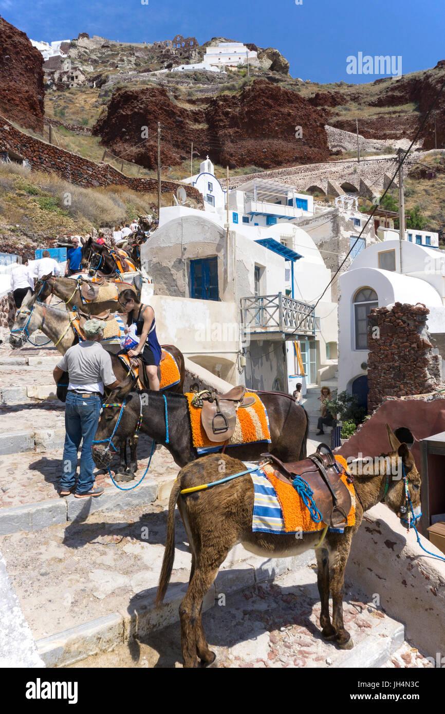 Esel im kleinen Fischerhafen Ammoudi, sie dienen zum Personentransport ueber zahlreiche Stufen hoch nach Oia, Santorin, - Stock Image