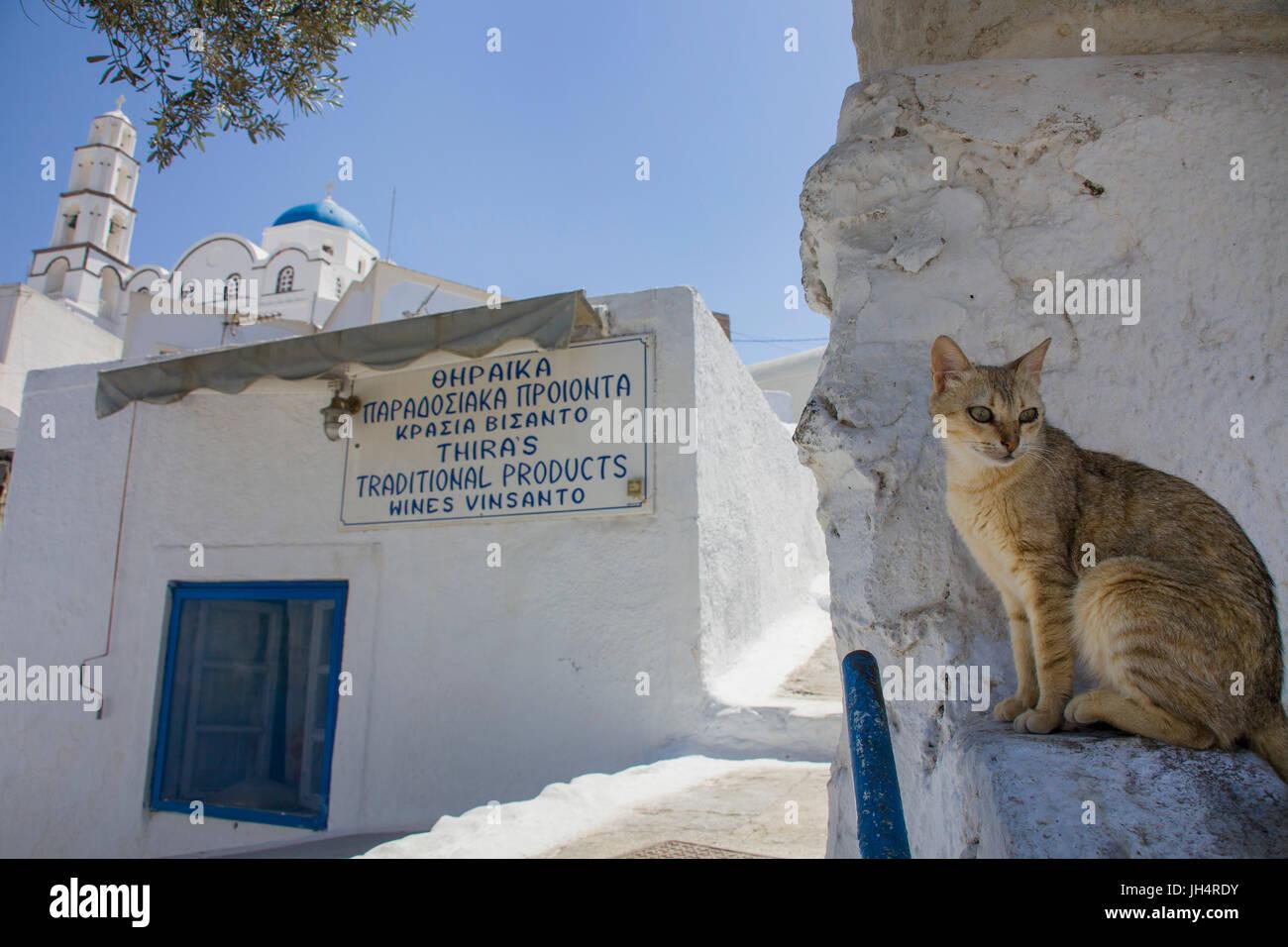 Katze verweilt im Schatten einer Gasse, orthodoxe Kirche im Kasteli Viertel, Pirgos, Santorin, Kykladen, Aegaeis, Stock Photo