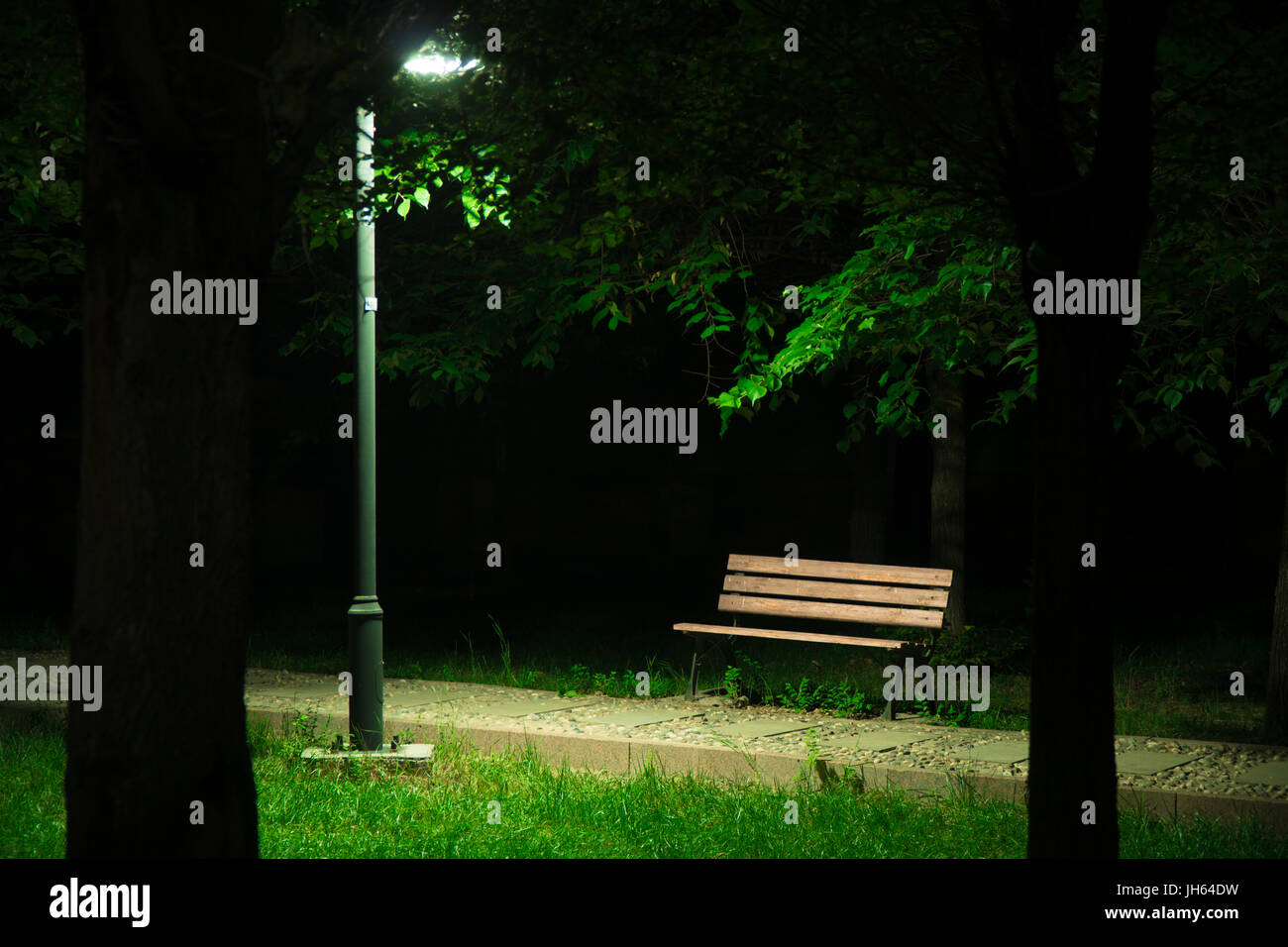 The light from a lamppost shinning onto a wooden bench and the surrounding grass with two trees as silhouettes at Stock Photo