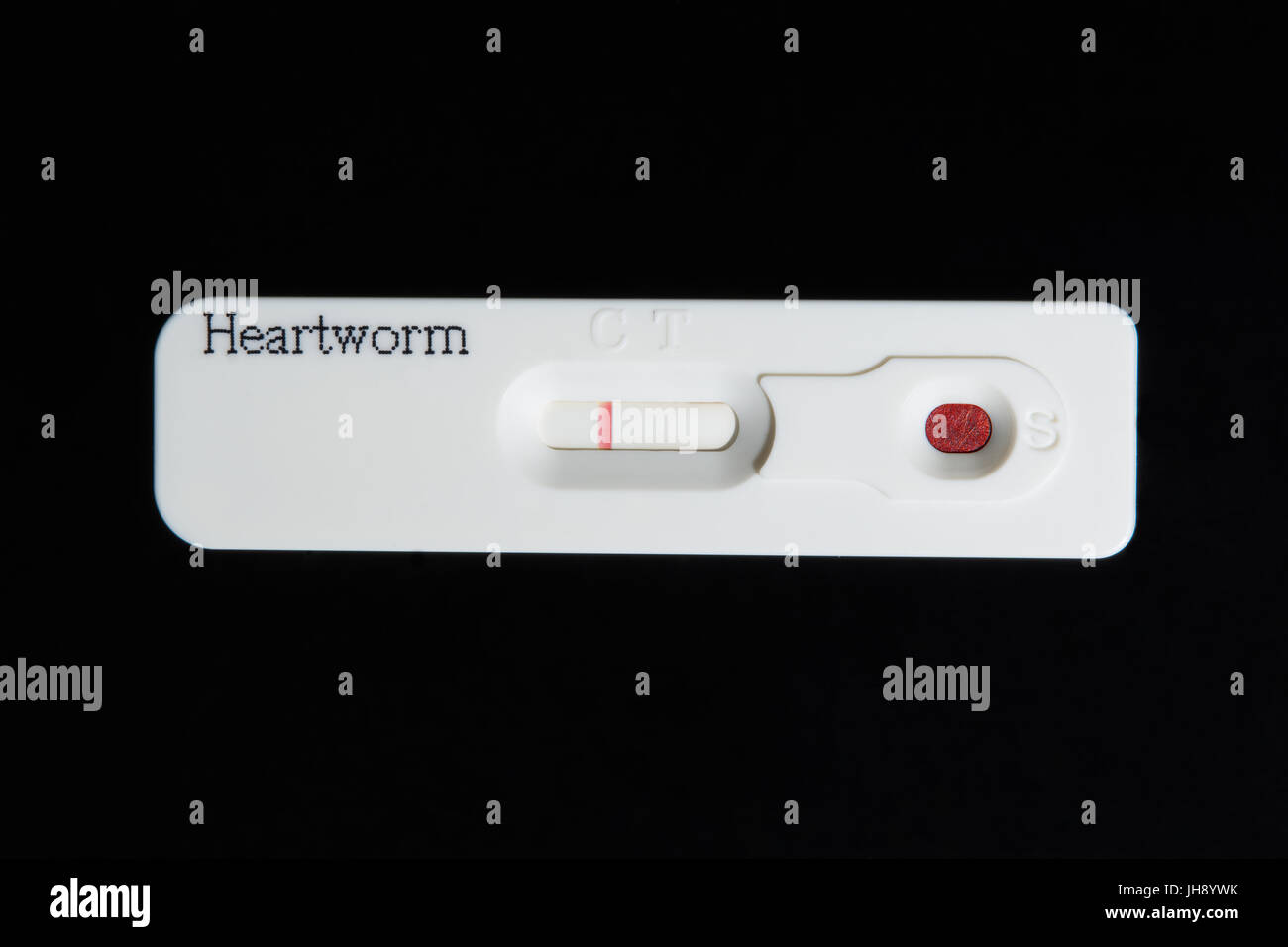 Heartworm test. A negative test result. A blood sample is placed in the sample well. One colored line appeared at - Stock Image