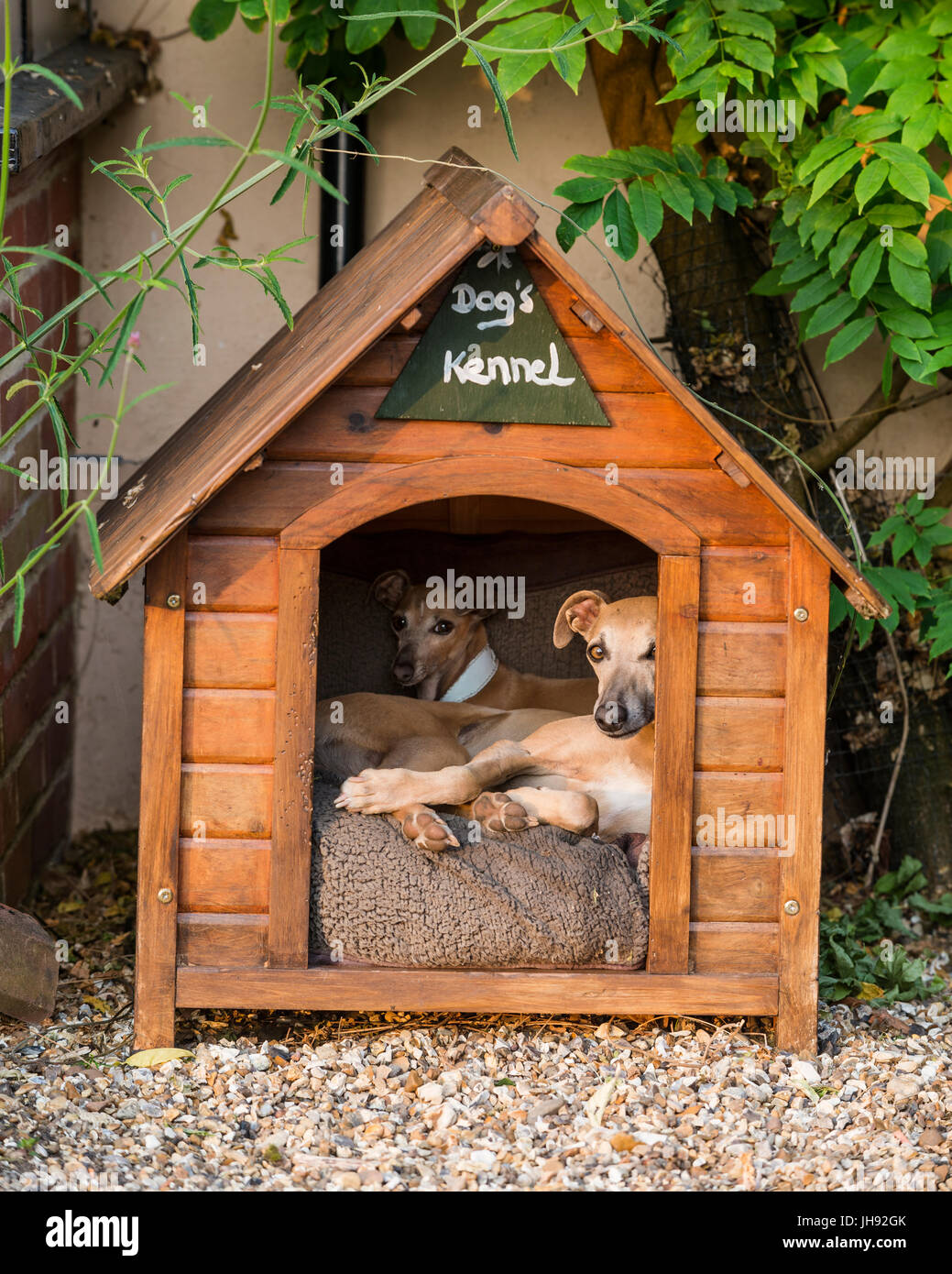 Dogs in wooden kennel - Stock Image