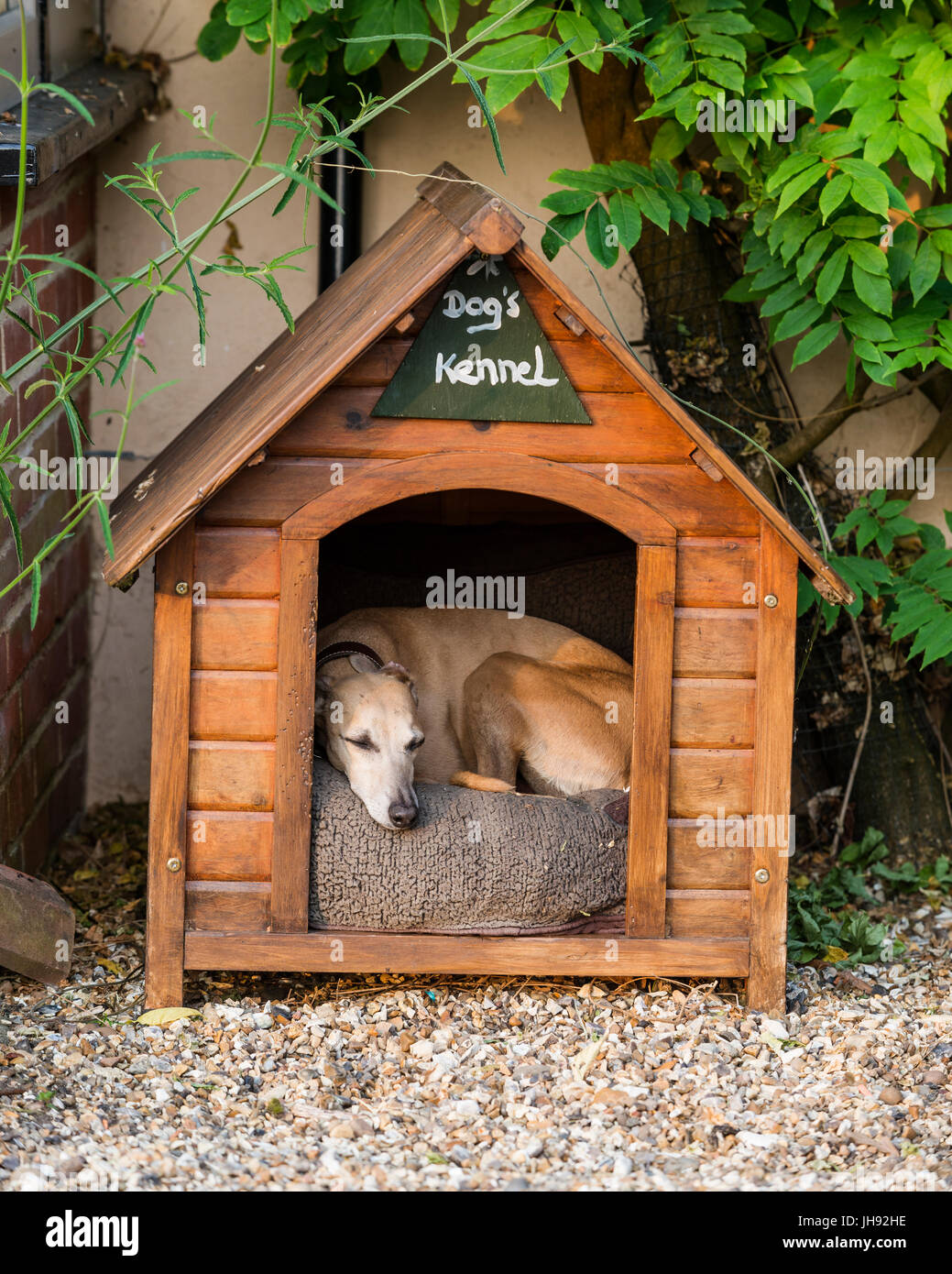 Dog in wooden kennel - Stock Image
