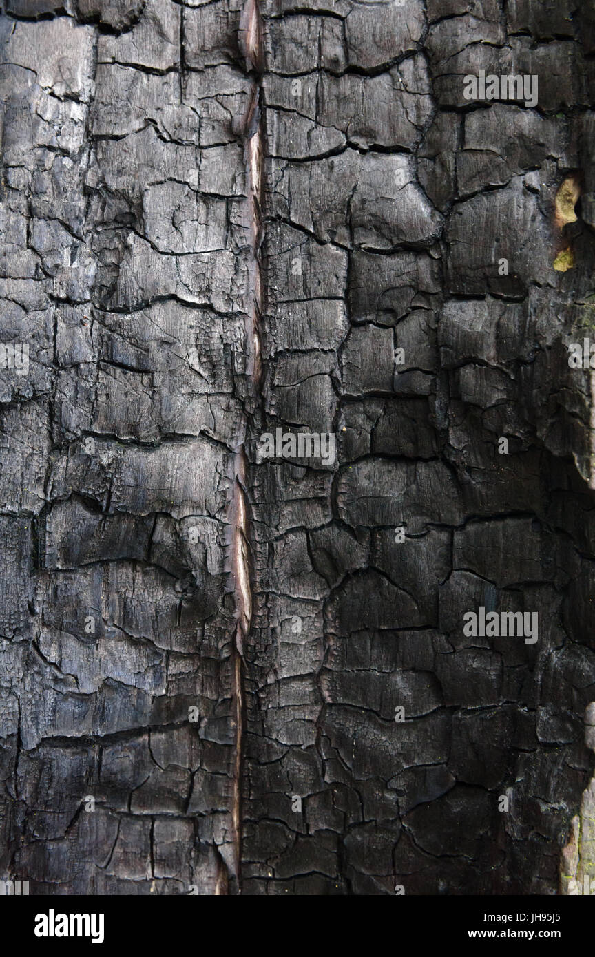 Black burned wood closeup - Stock Image