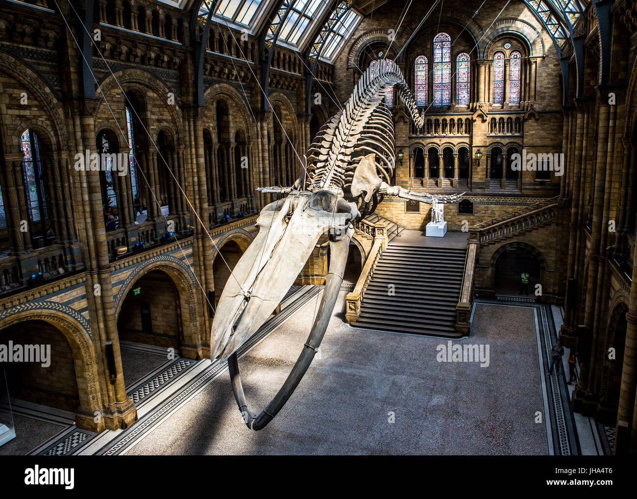 Hope, Blue Whale, Natural History Museum - Stock Image