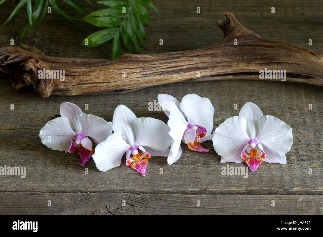 Orchids on boards zen spa abstract still life Stock Photo