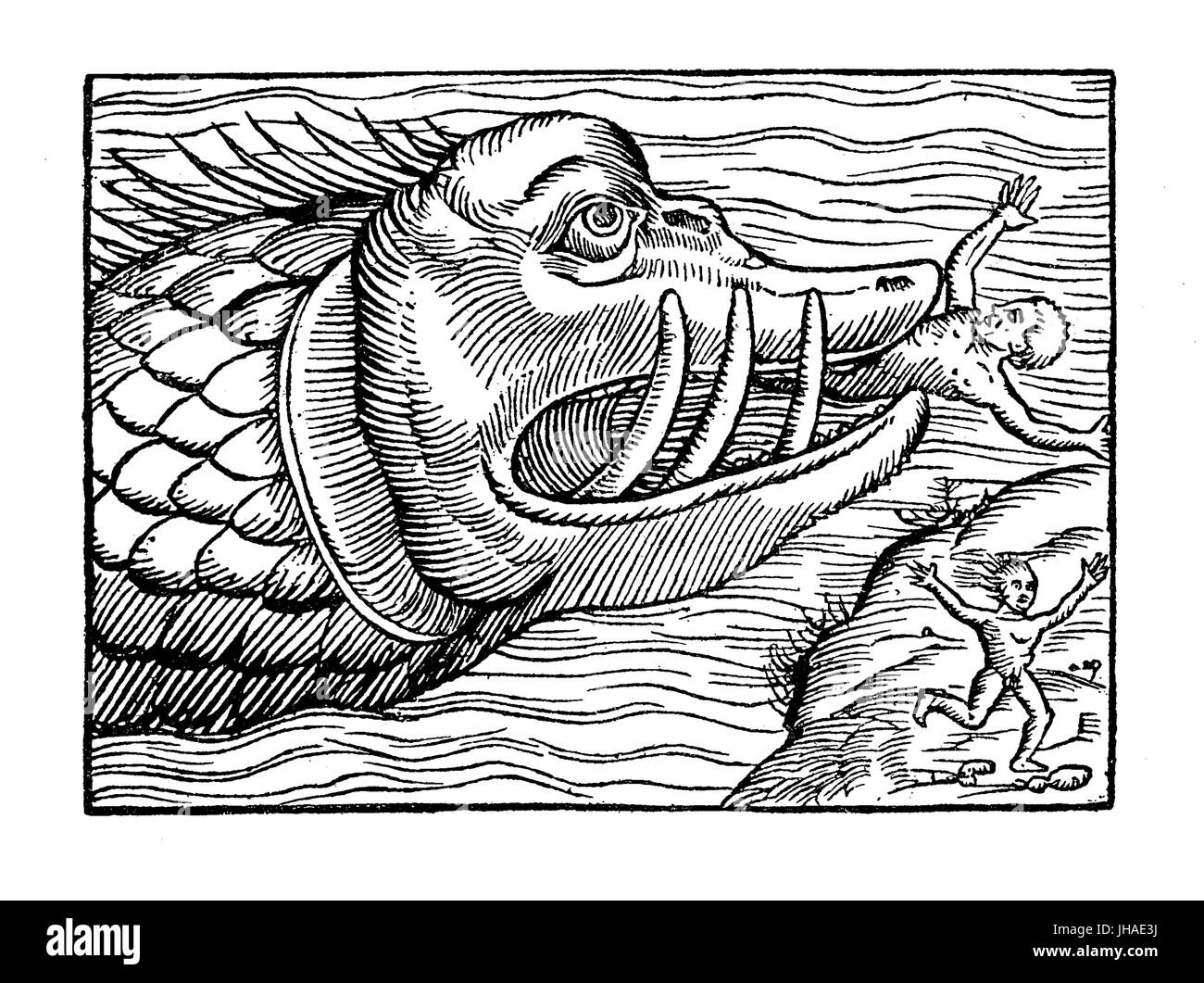 Sea monster eating humans, medieval engraving, year 1550 - Stock Image