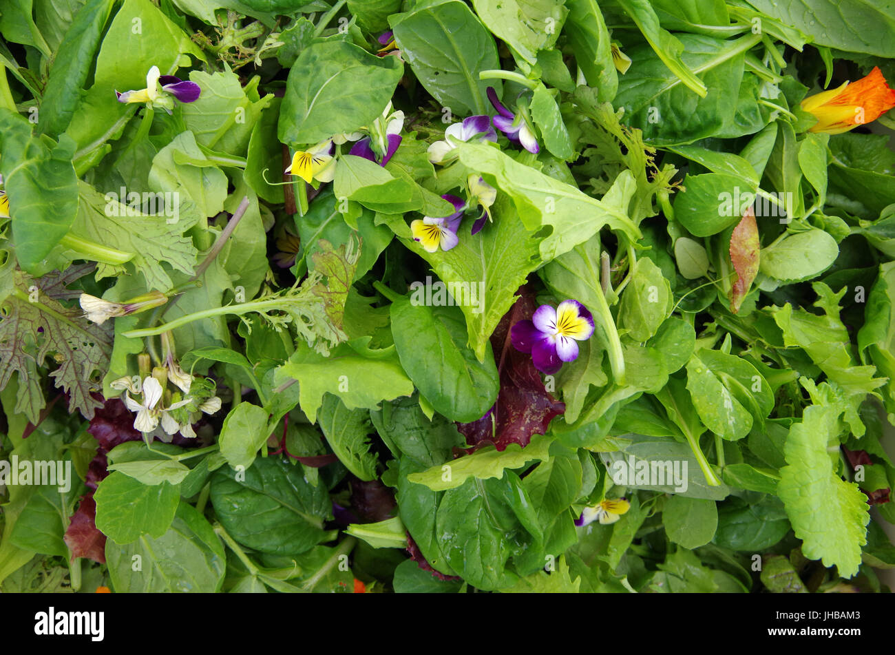 Mesclun salad greens with edible flowers - Stock Image