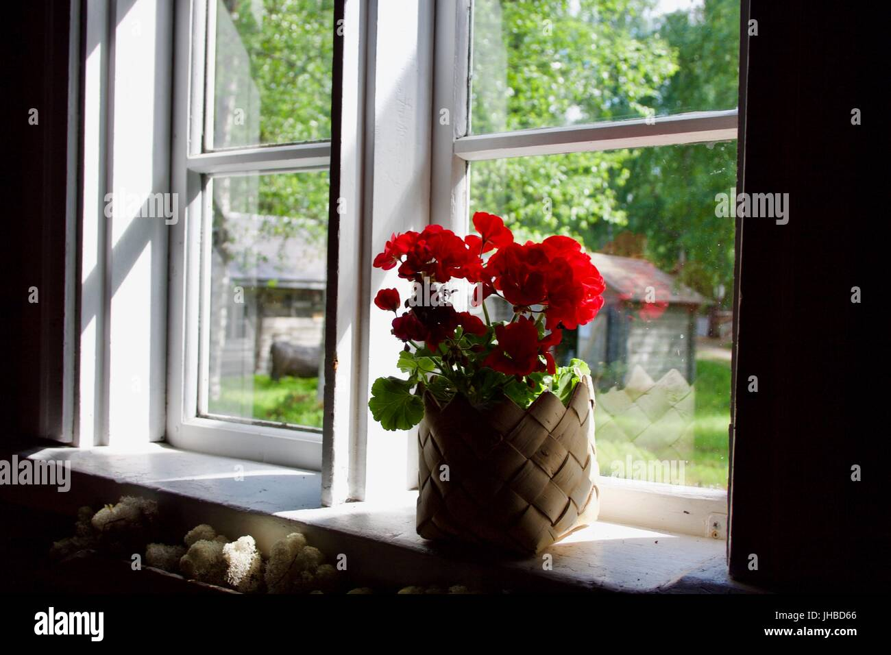 A red flower pot by a window. Old Finnish farmhouse window and farm - Stock Image
