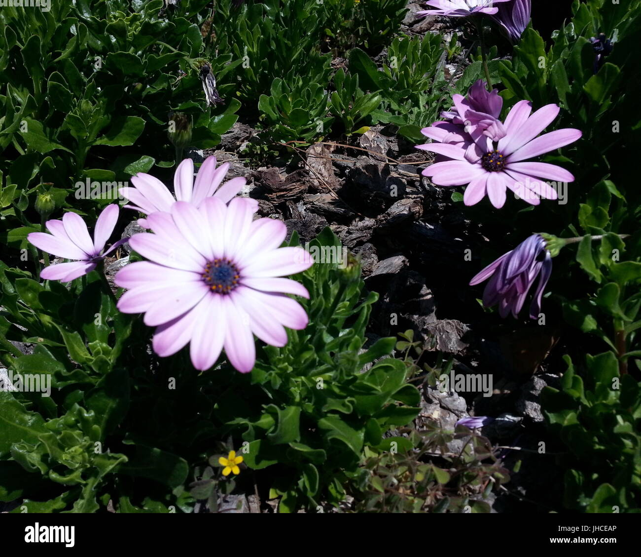 Purple Flower With Blue Center Stock Photos Purple Flower With