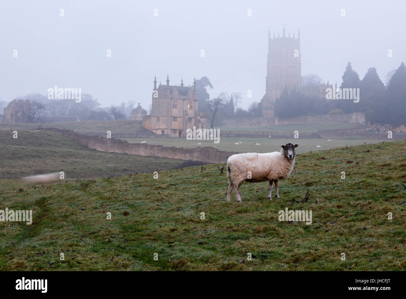 St James' Church and sheep on misty winter morning, Chipping Campden, Cotswolds, Gloucestershire, England, United - Stock Image