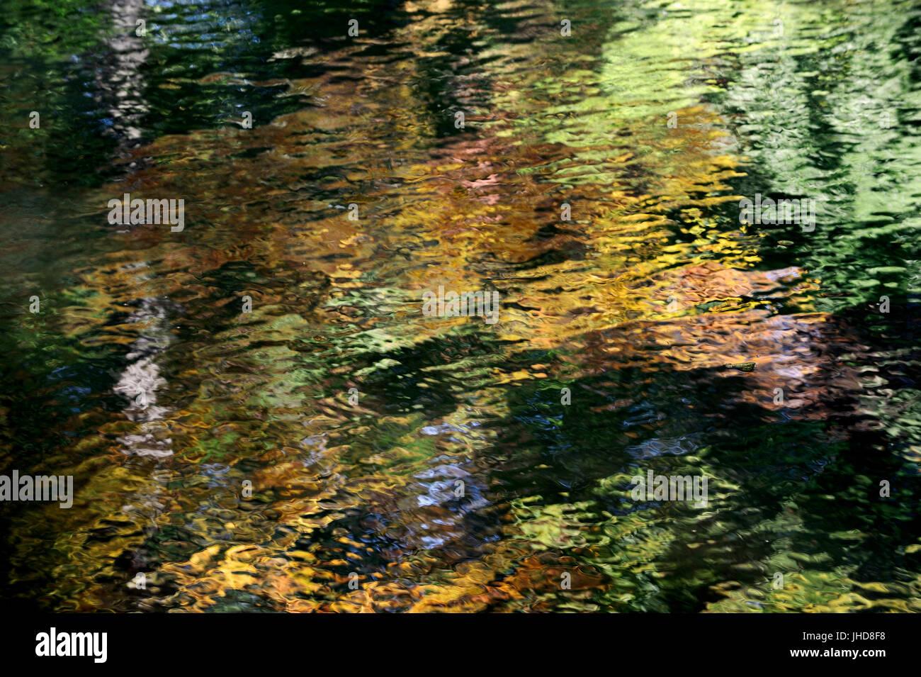 Trees mirrored in water, North Rhine-Westphalia, Germany   Baeume spiegeln sich im Wasser, Nordrhein-Westfalen, - Stock Image