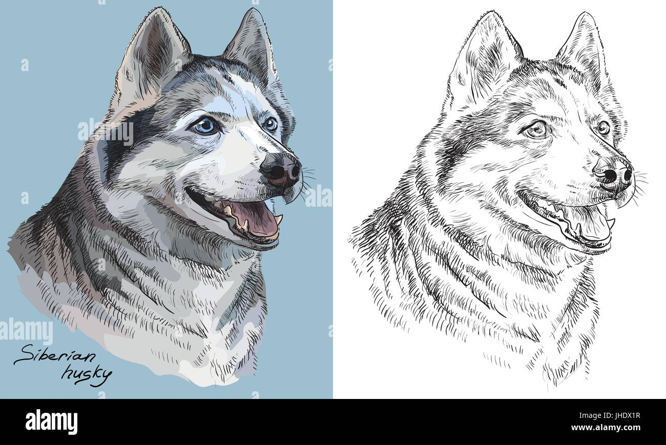 Colored siberian husky portrait on blue background and and black color on white background vector hand drawing illustration - Stock Vector