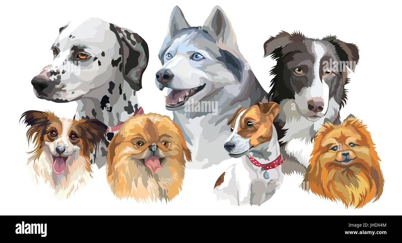Set of colorful vector portraits of dog breeds (siberian husky, border-collie; Dalmatian, jack Russel terrier, papillon, - Stock Vector
