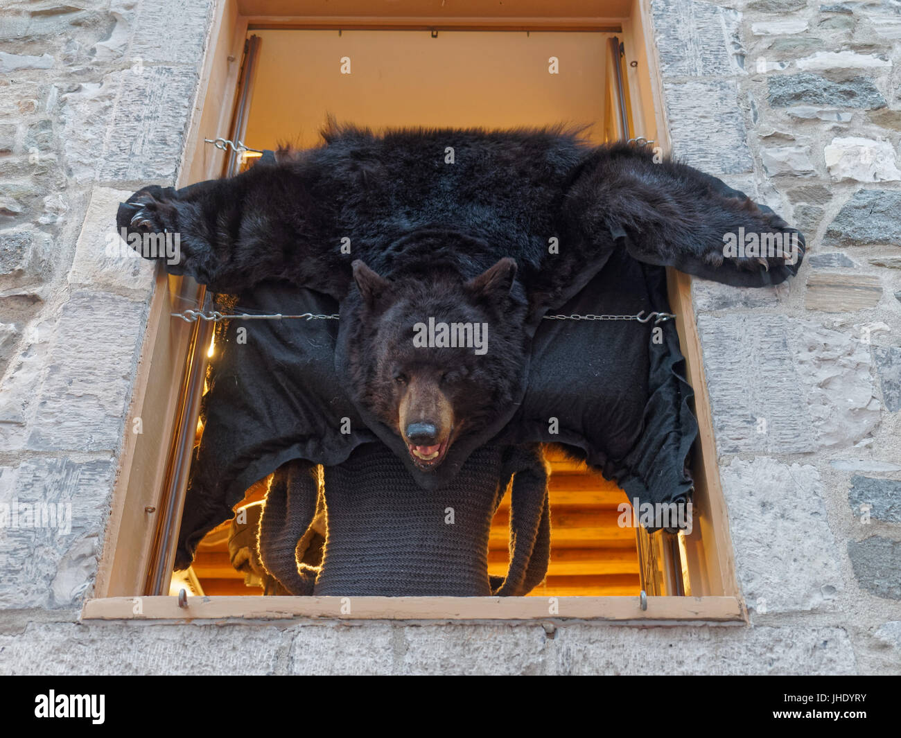 A bear skin rug - Stock Image