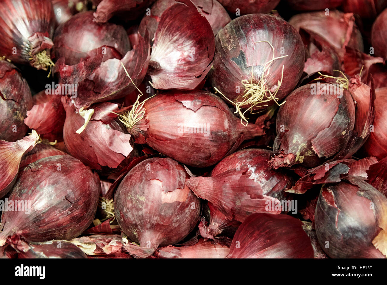 fresh red onions - Stock Image