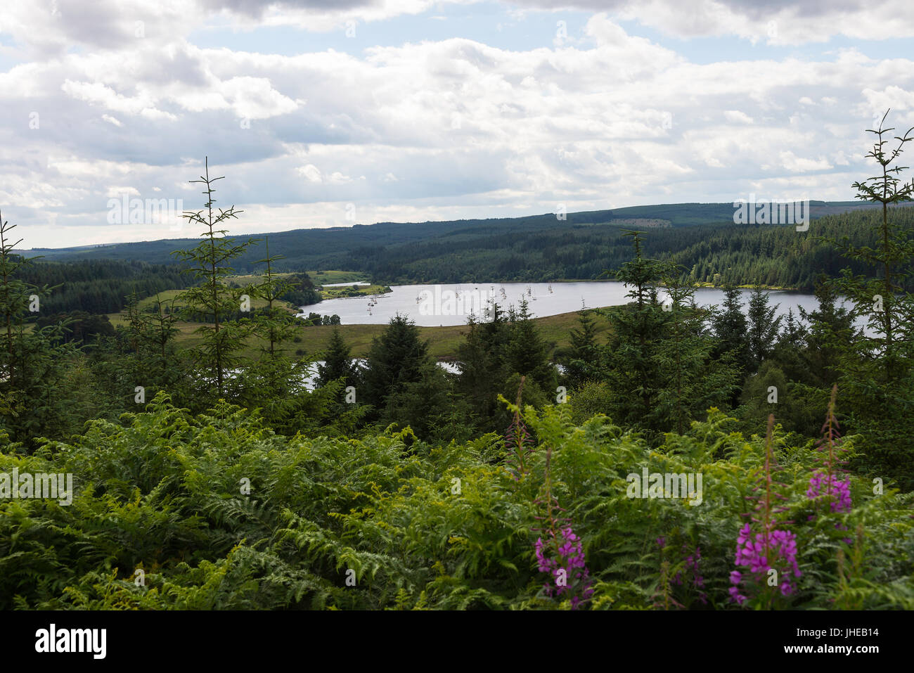 Kielder Water and Reservoir with Forest and Woodland in North Northumberland England United Kingdom UK - Stock Image