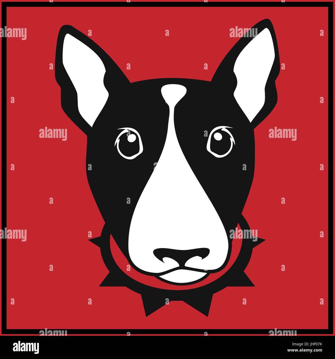 Cute bull terrier with dog collar on red background - Stock Image