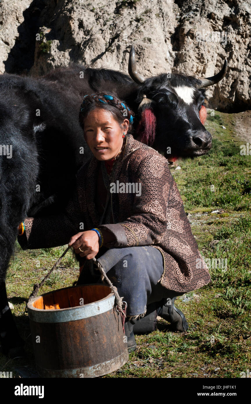A woman milks a cow in a small settlement of Dopkas (nomadic shepherds). Gyantse. Tibet, China. - Stock Image