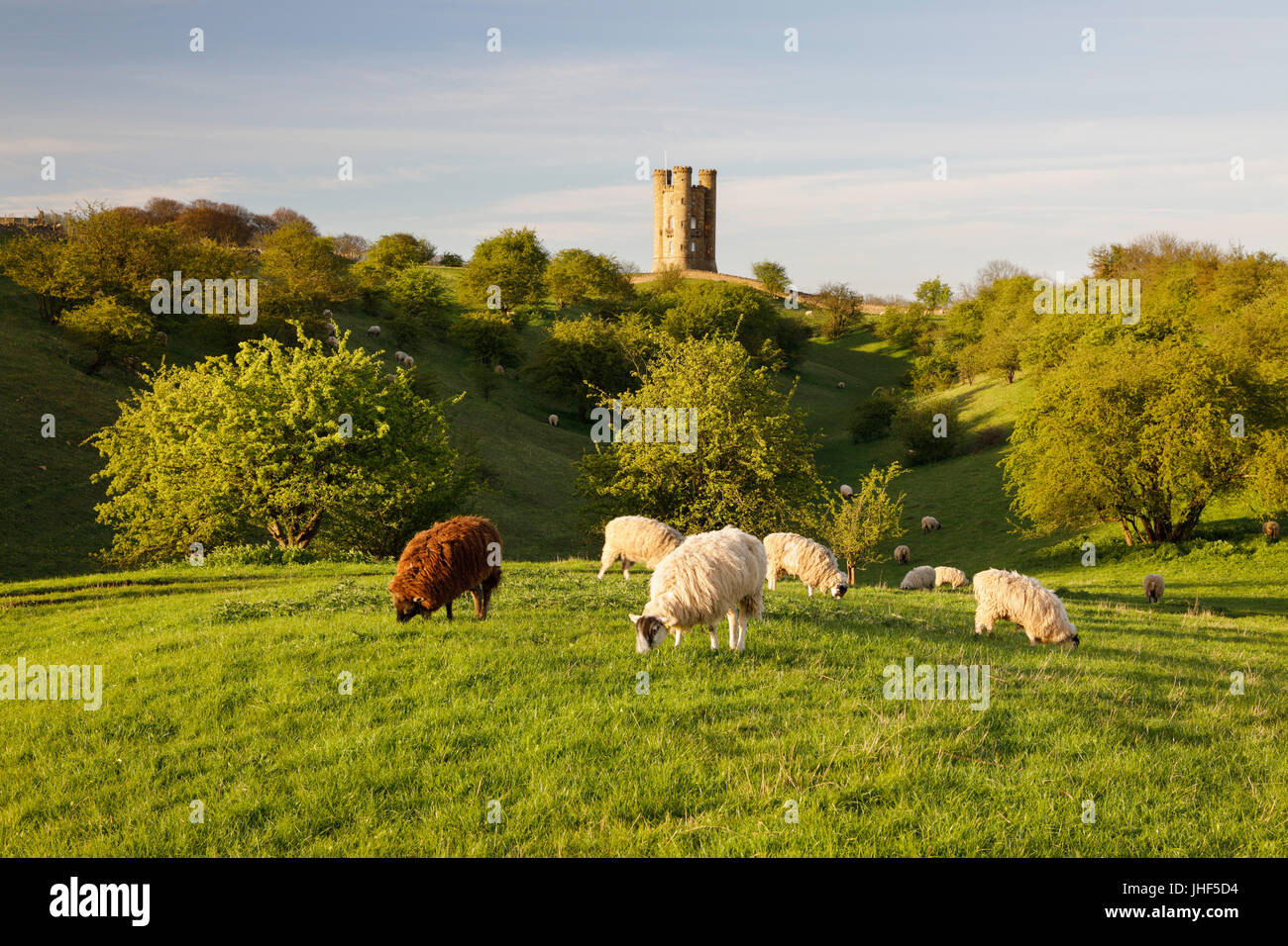 Broadway Tower and grazing sheep, Broadway, Cotswolds, Worcestershire, England, United Kingdom, Europe - Stock Image