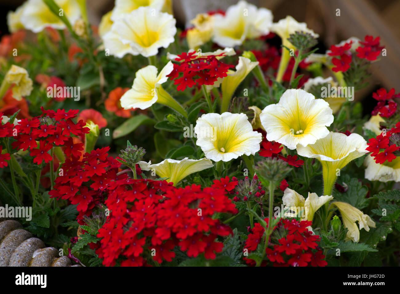 Gardening Pretty Flowers Pot Blooming Stock Photos Gardening