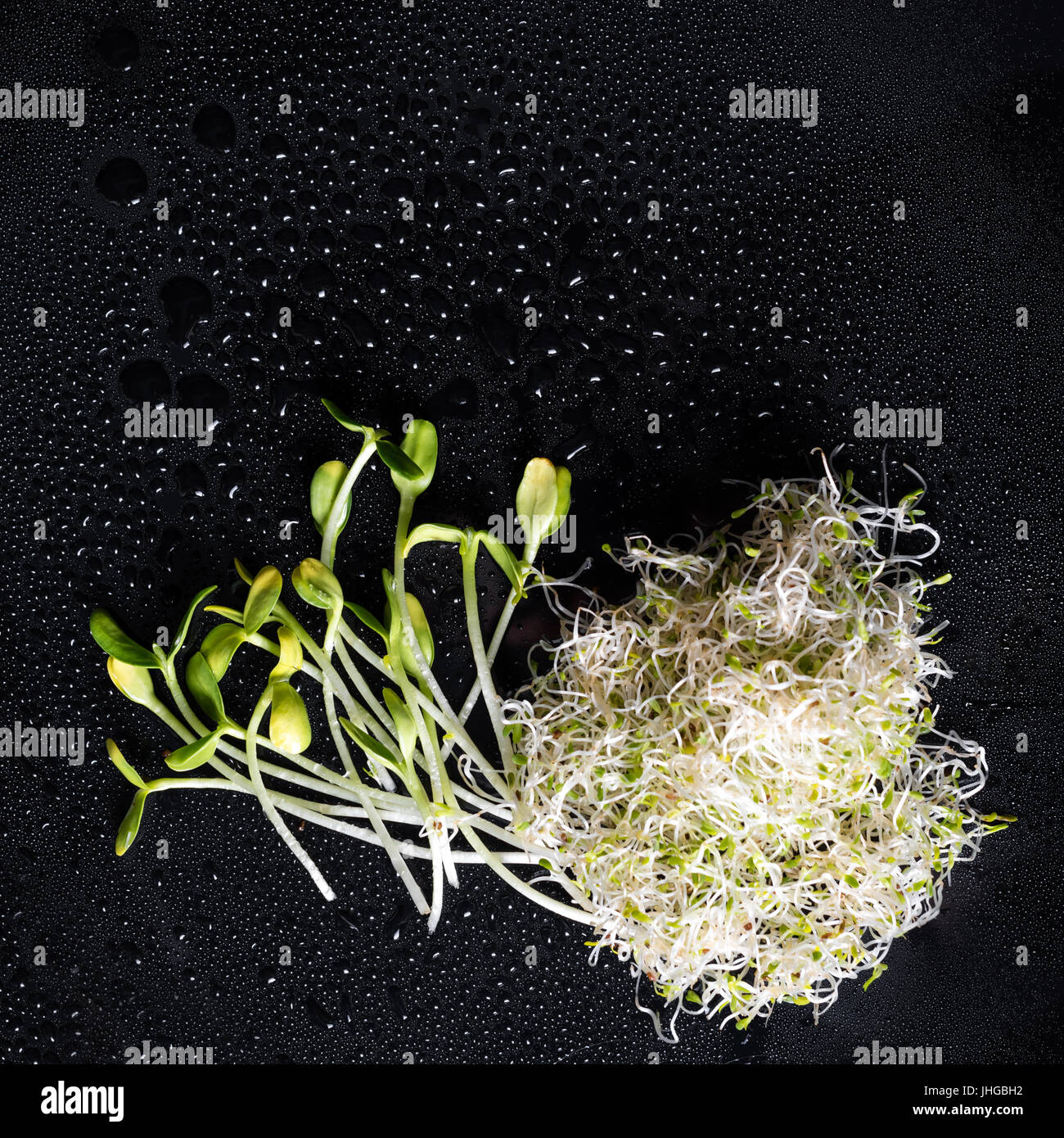 Mixed organic micro greens on black background with water drops. Fresh sunflower and heap of alfalfa micro green sprouts for healthy vegan food cooking. Health, diet concept.Cut microgreens, top view Stock Photo