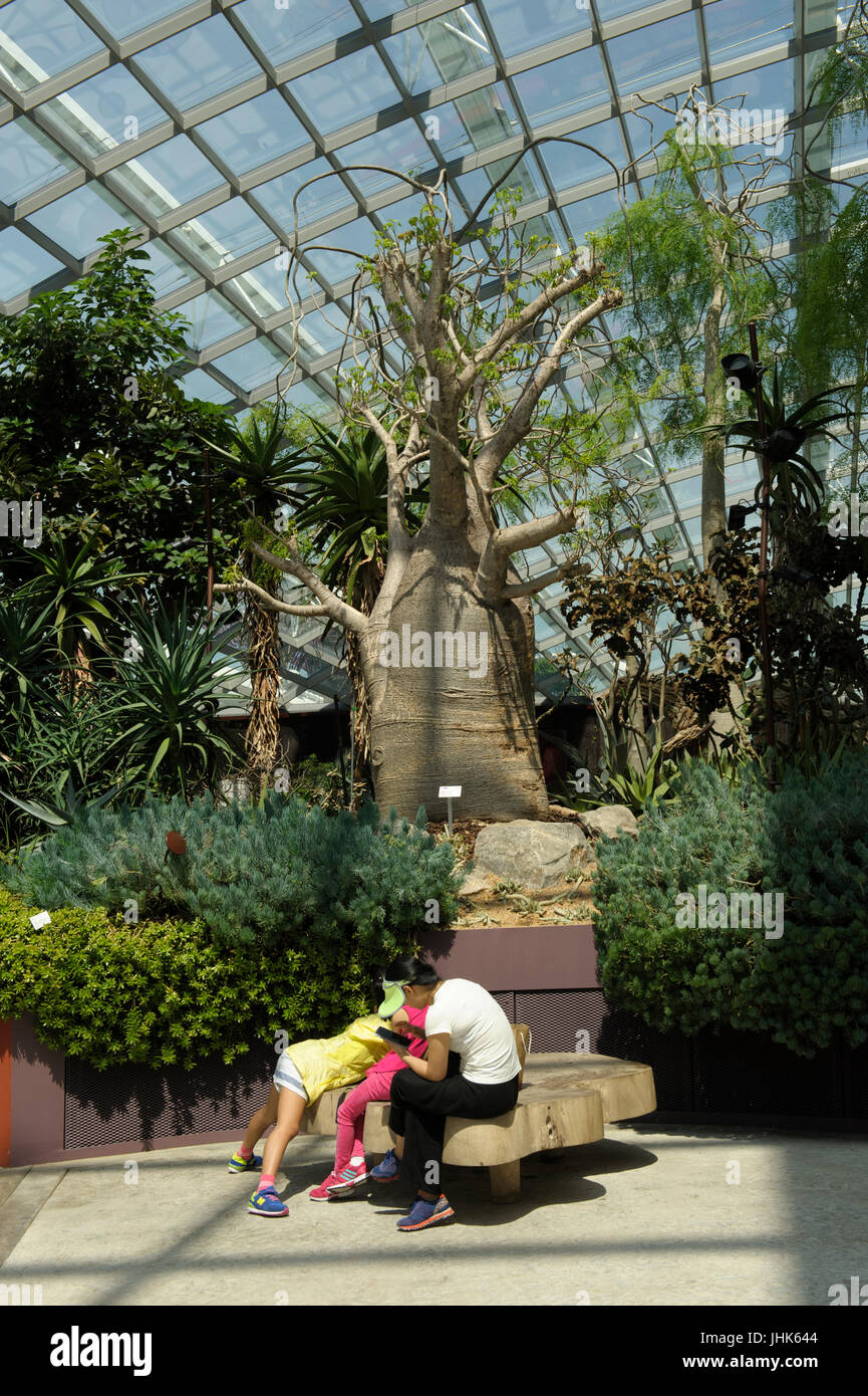 Woman and child in front of huge boabab tree in Flower Dome, Gardens by the Bay, Singapore Stock Photo