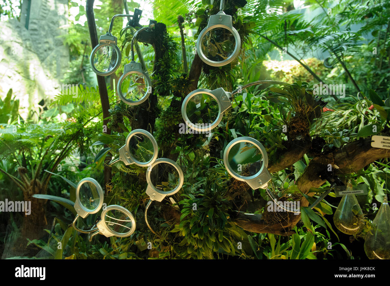 Maginfying glasses provided for viewers to look more closely at orchid flowers. Cloud Forest, Gardens by the Bay, Stock Photo