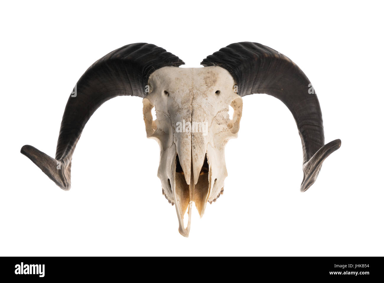 Ram skull with horns, isolated on white background Stock Photo ...