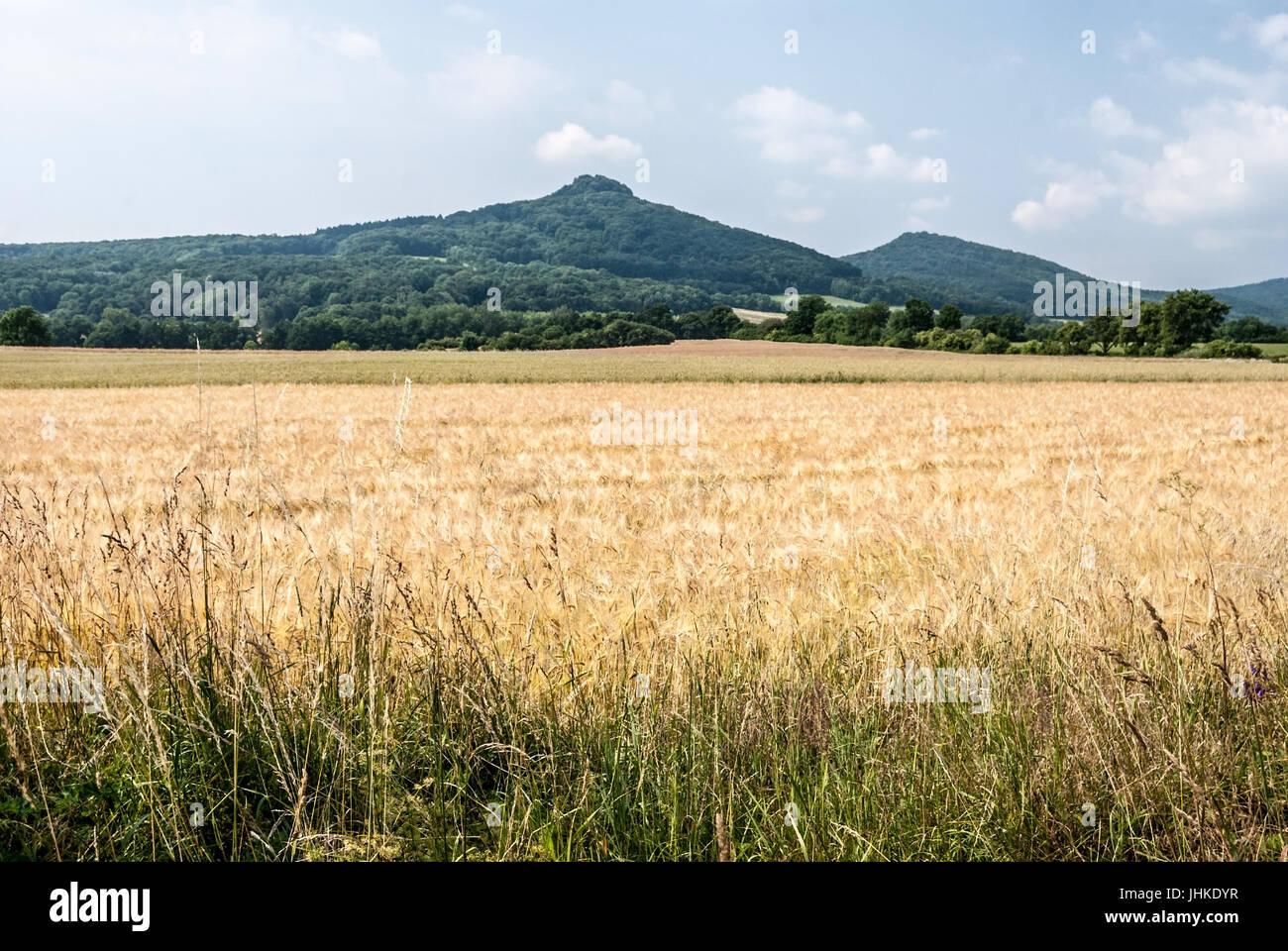 nice landscaoe of Ceske stredohori mountains near Lovosice city in Czech republic with corny field, Ostry and Lipska - Stock Image