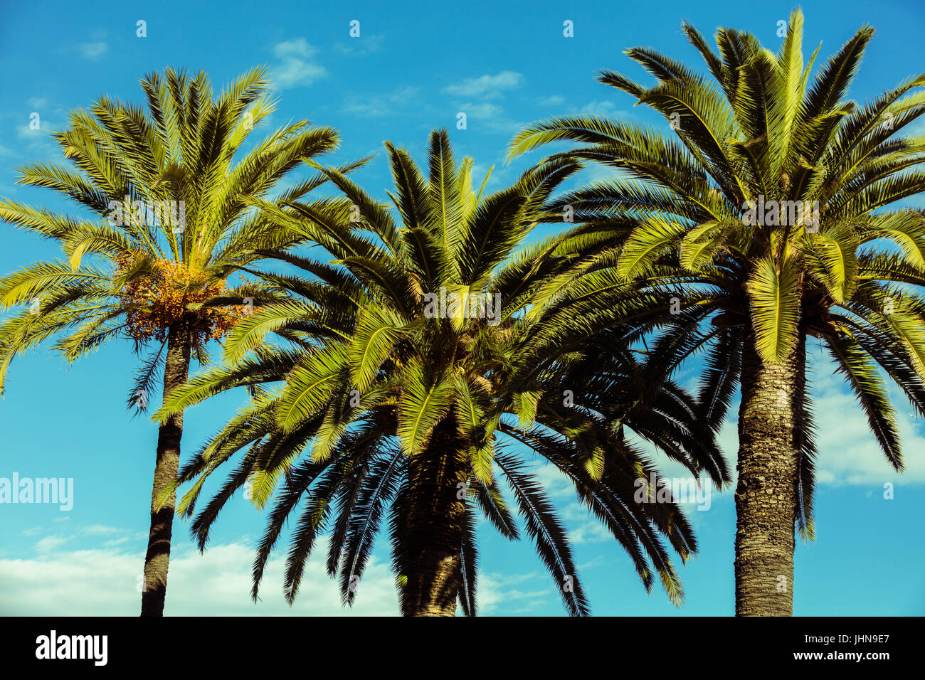 Tropic palm trees against the blue sky - Stock Image