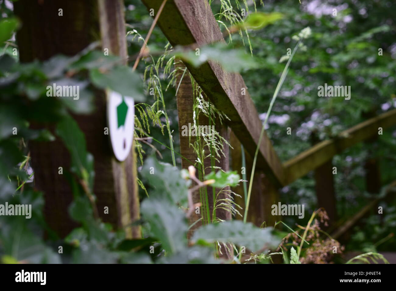 Green arrow, country walk - Stock Image
