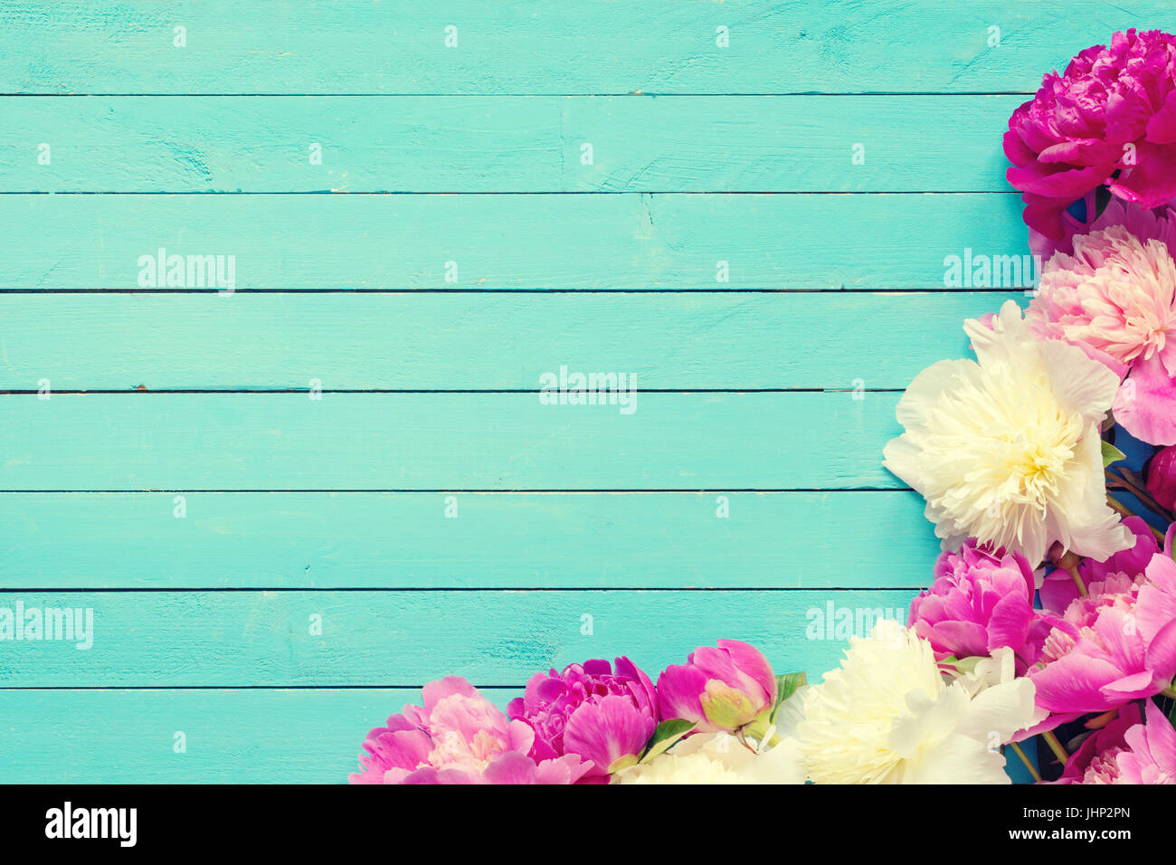 Floral frame / background with beautiful pink, purple and white peonies on old turquoise wooden planks. Shabby chic, - Stock Image