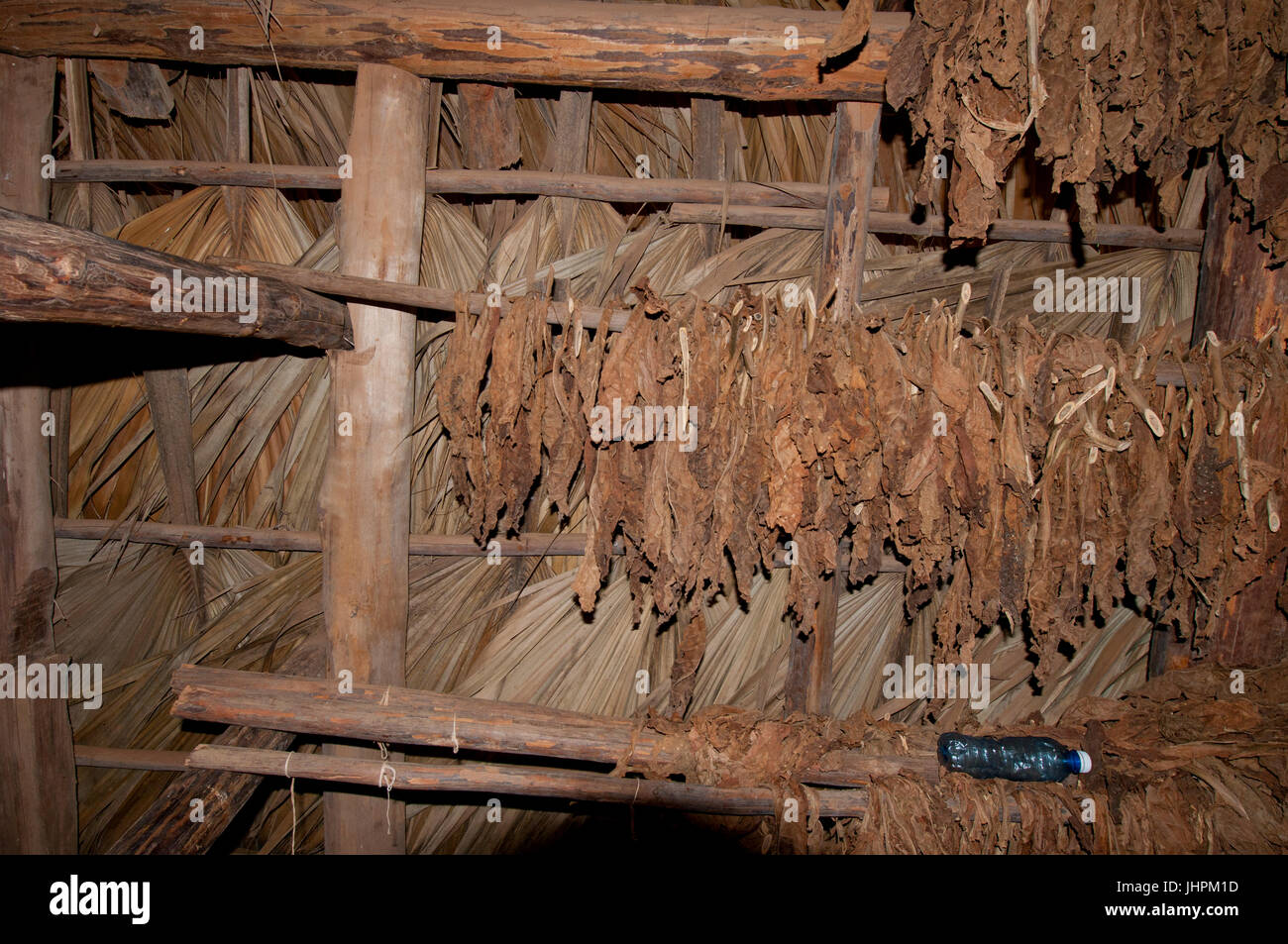Cuban tobacco leaves drying in a drying hut near Vinalles, Cuba - Stock Image