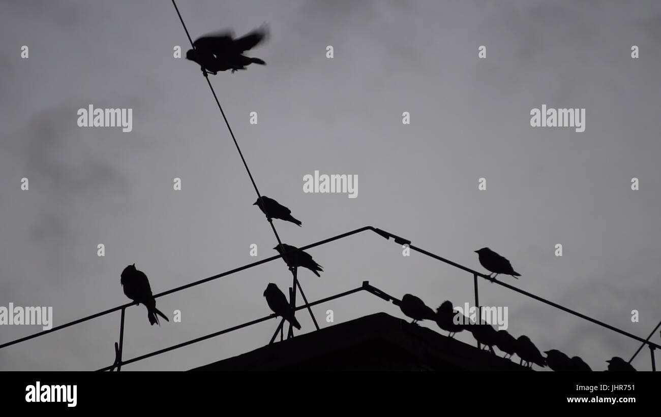 crows sitting on a wire on the roof. - Stock Image