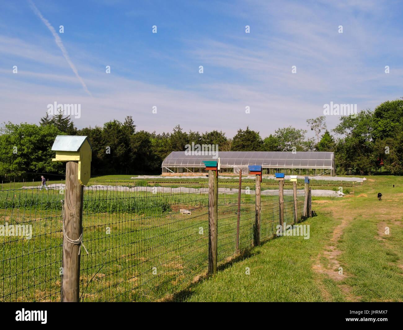 Bird houses on fence post, farm - Stock Image