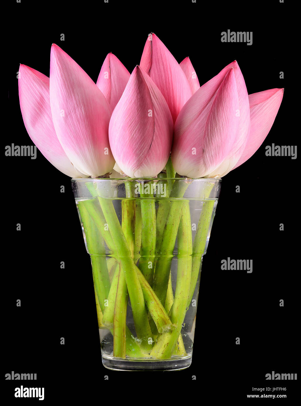 Pink Lotus Flowers In A Transparent Vase Water Lily Bud Close Up