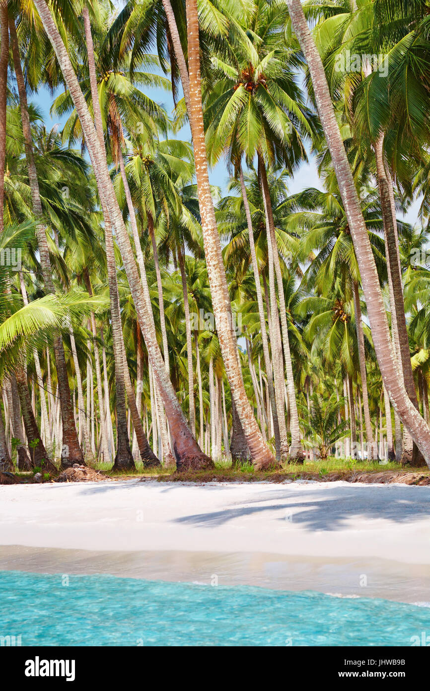 Tropical beach with palm grove, Kood island, Thailand - Stock Image