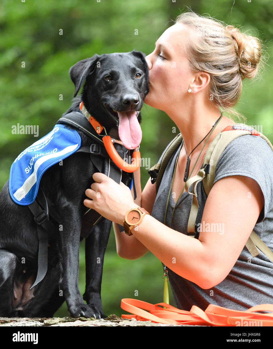 Gelnhausen, Germany. 23rd June, 2017. Labrador 'Maple' cuddling with her trainer Laura Hollerbach, research - Stock Image