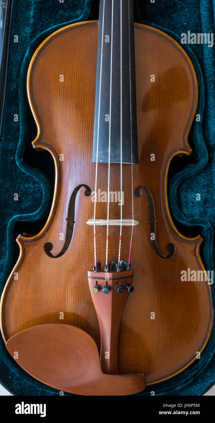 Close up of musical stringed instrument. Classical violin in velvet case with f holes, strings and chin rest Stock Photo