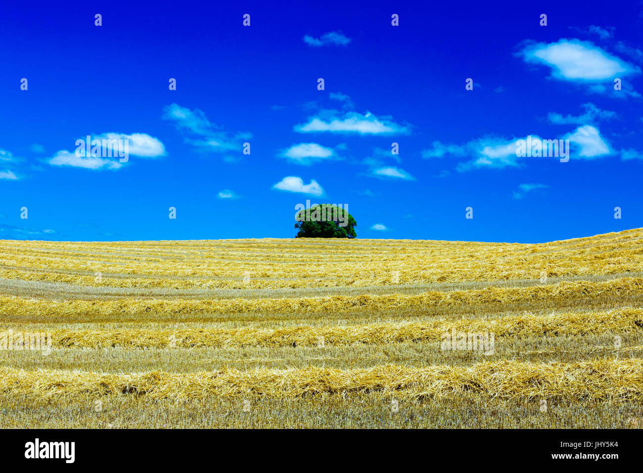 Cereal farm. Stock Photo