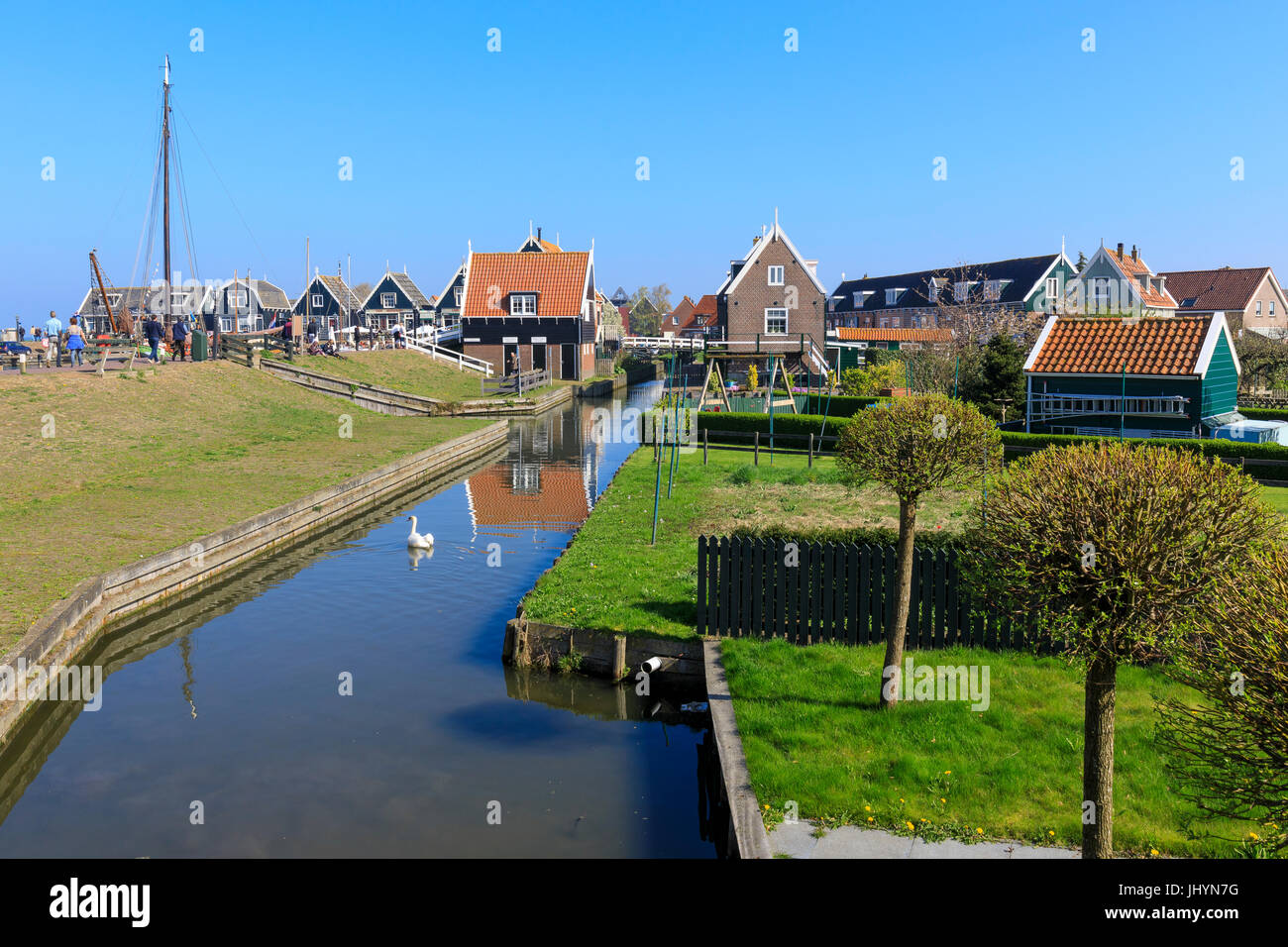 White swan in the canal surrounded by meadows and typical wooden houses, Marken, Waterland, North Holland, The Netherlands - Stock Image