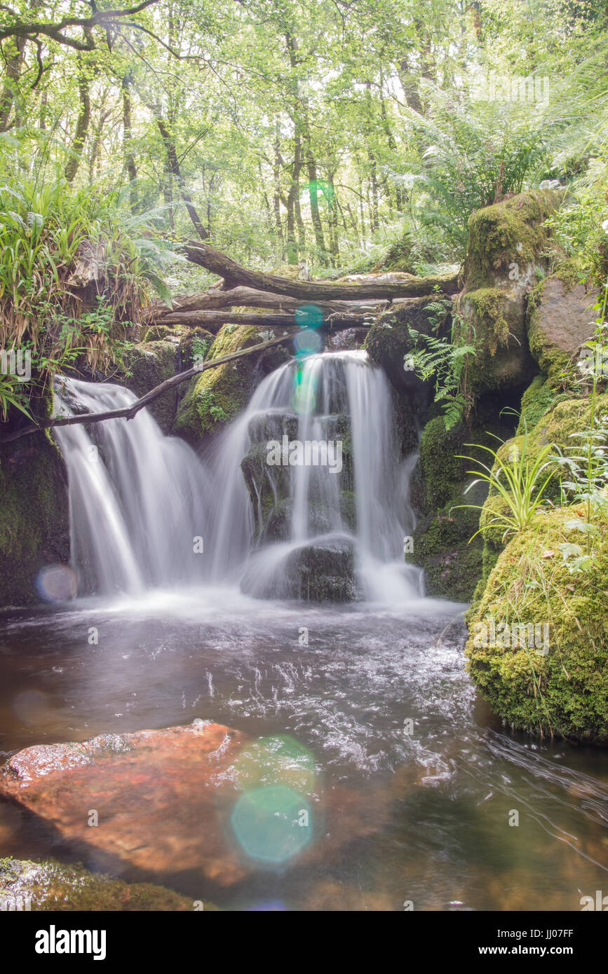 Beautiful waterfall in the forest - Stock Image