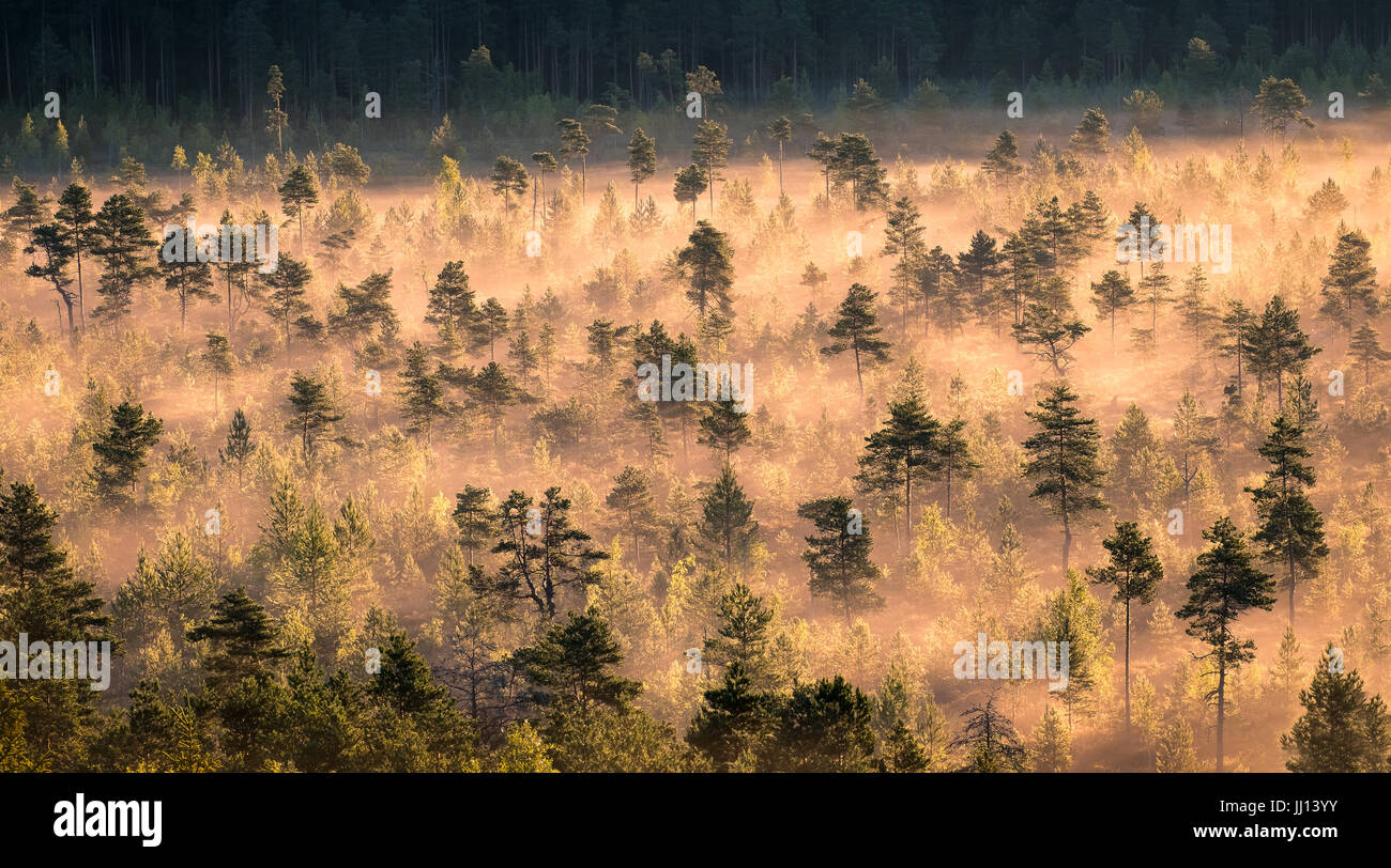 Morning fog and sunrise in Torronsuo National Park, Finland - Stock Image