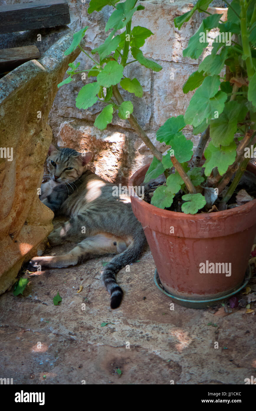 the cat relaxing in the outdoor garden during the summer day. - Stock Image