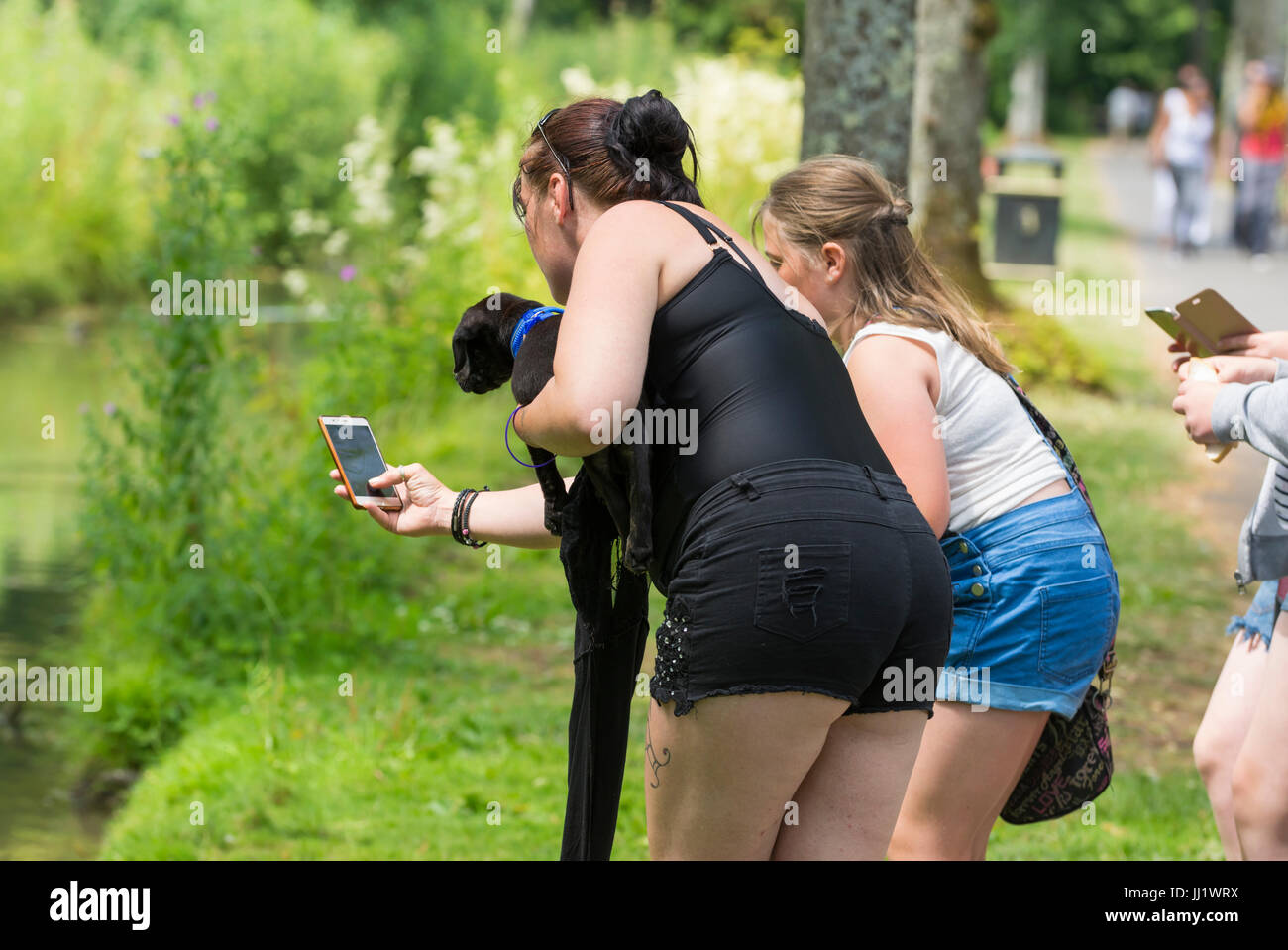 Woman taking photos of ducks with a smartphone. - Stock Image