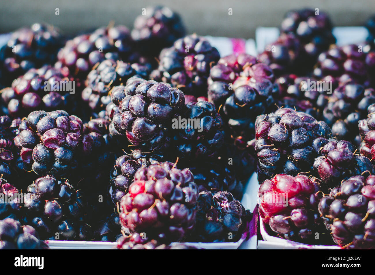 Locally grown organic summer blackberries at the Farmer's Marker - Stock Image