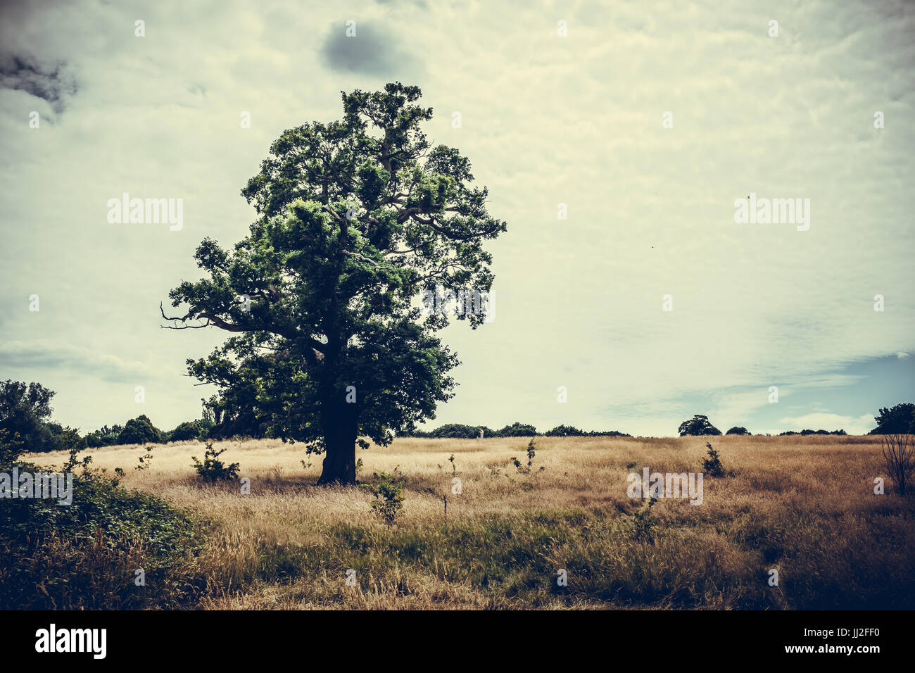 Hampstead Heath Landscape - Stock Image